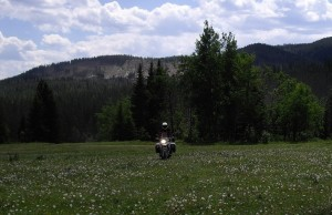 meadow riding