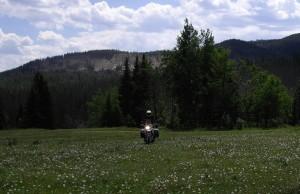 meadow riding