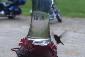A hummingbird at the feeder outside the restaurant